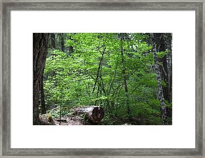 Lighting Up My World Forest Photography By Omashte Framed Print by Omaste Witkowski