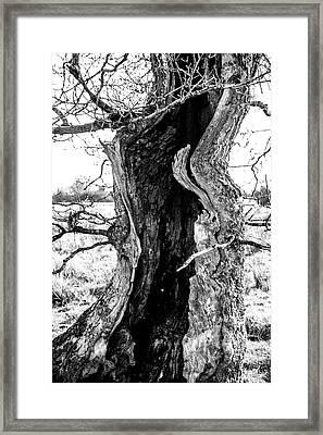 Lightning Tree Framed Print
