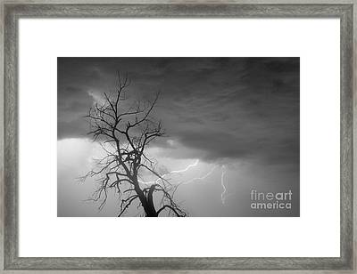 Lightning Tree Silhouette 29 In Black And White Framed Print by James BO  Insogna
