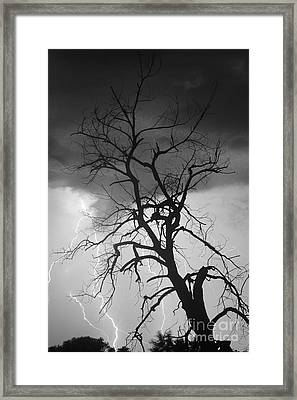 Lightning Tree Silhouette Portrait Bw Framed Print by James BO  Insogna