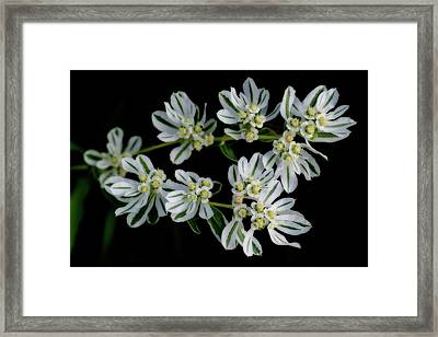 Lights In The Darkness Framed Print
