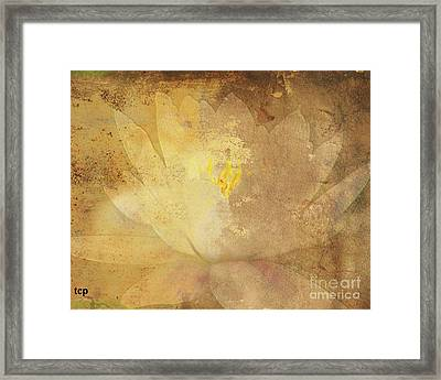 Framed Print featuring the photograph Lights On Lily by Traci Cottingham