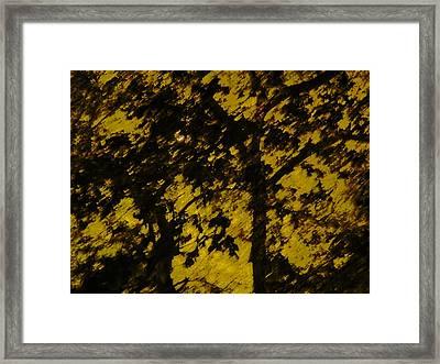 Lighttthru Forest Framed Print by Florene Welebny
