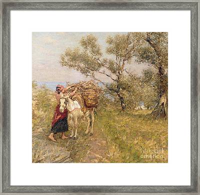 Ligurian Olives Framed Print by Henry Herbert La Thangue
