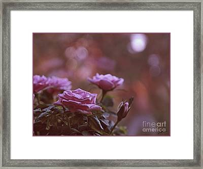 Like A Fine Rosie Of Pastels Framed Print