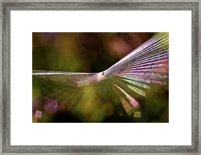 Like A Rainbow Framed Print by Roeselien Raimond