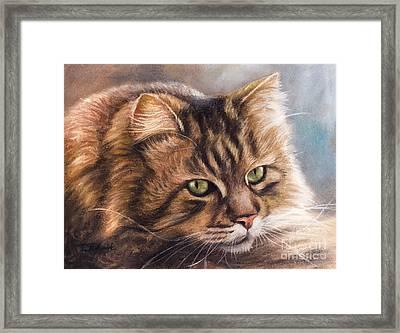 Like A Tiger Framed Print by Tobiasz Stefaniak