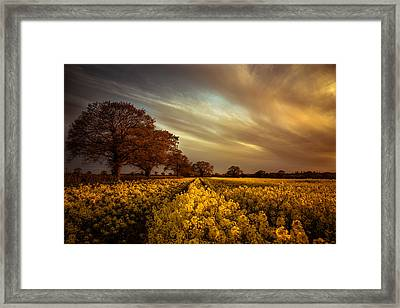 Like An Old Master Framed Print by Chris Fletcher