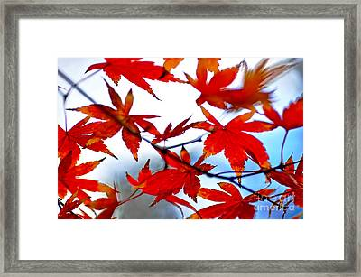 Like Autumn Butterflies In The Breeze Framed Print