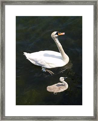 Like Father Like Son Framed Print by Michael Canning