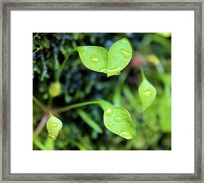 Like Little Chalices  Framed Print by Jeff Swan