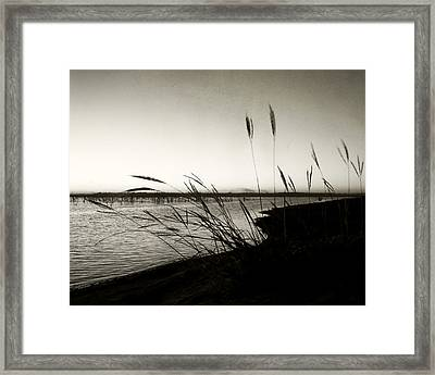 Like Morning In Your Eyes Framed Print by Mike McMurray