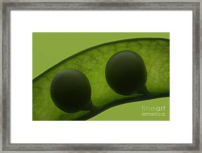 Like Two Peas In A Pod Framed Print by Janeen Wassink Searles