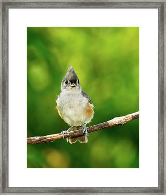 Liking My Style Framed Print by Betty LaRue