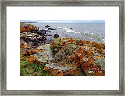 Liking The Lichens Framed Print by Sandra Updyke