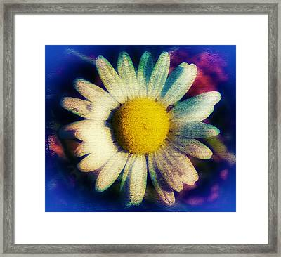 Lil Daisey Framed Print by Bill Cannon