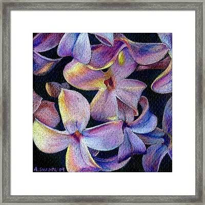 Lilac 1 Framed Print by Audi Swope