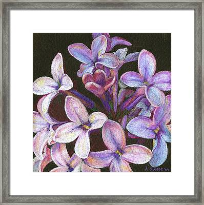 Lilac 2 Framed Print by Audi Swope
