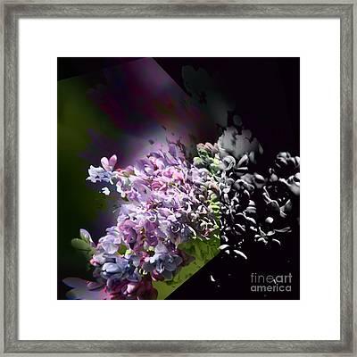 Lilac 2 Framed Print
