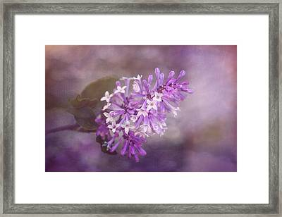 Lilac Blossom Framed Print by Tom Mc Nemar
