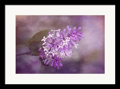 Lilac Petals Framed Prints