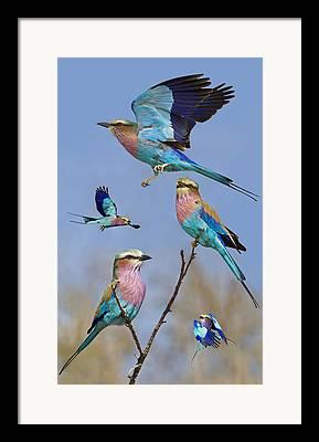 Nature Collage Framed Prints