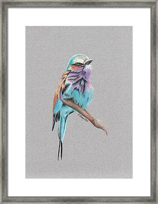 Lilac Breasted Roller Framed Print