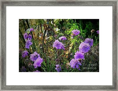 Lilac Carved Jellytot Framed Print
