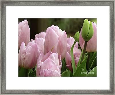 Lilac Charm #2 Framed Print