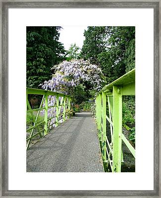 Lilac Colour  Crossing Framed Print