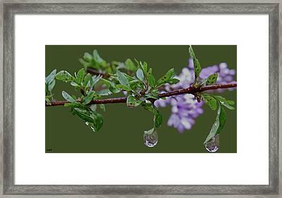 Lilac Dew Drops  Framed Print by Debra     Vatalaro