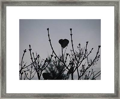 Lilac Heart Framed Print by Judyann Matthews