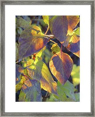 Lilac Leaves Framed Print
