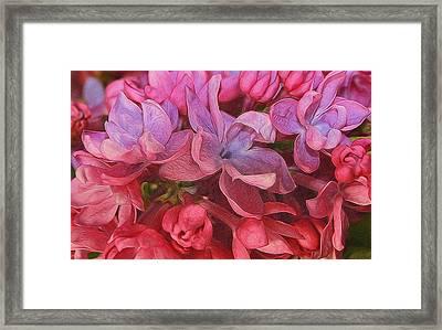Lilac Blush Framed Print