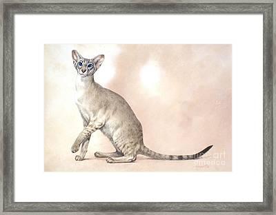 Lilac Point Framed Print by John Francis