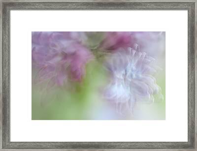 Lilac. Spring Vibrations Framed Print by Jenny Rainbow