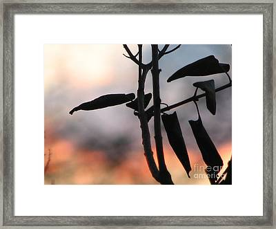 Lilac Sunset Framed Print by Roxy Riou