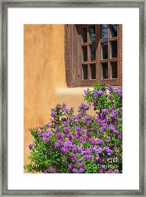 Lilacs And Adobe Framed Print by Catherine Sherman