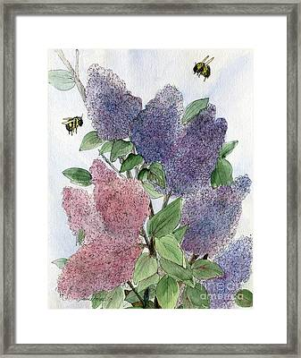 Lilacs And Bees Framed Print
