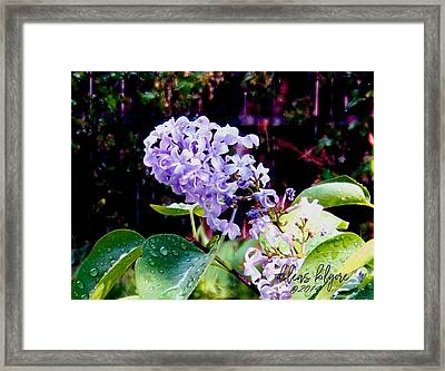 Framed Print featuring the photograph Lilacs by Deleas Kilgore