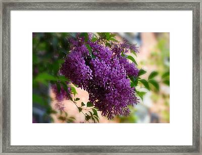 Framed Print featuring the photograph Lilacs by Elaine Manley