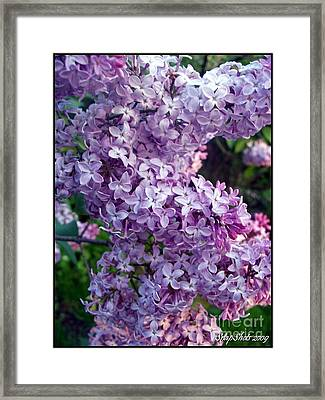 Lilacs Framed Print by Emily Kelley