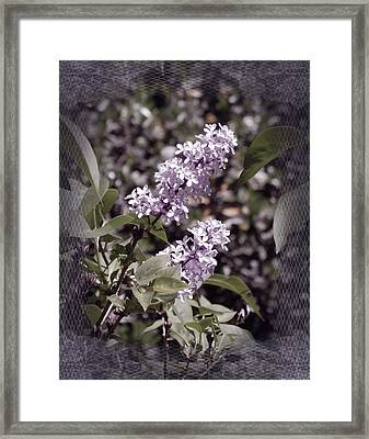 Lilacs In Lace Framed Print