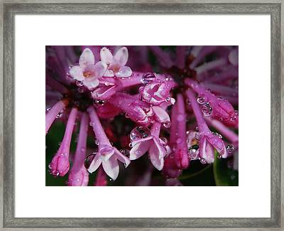 Framed Print featuring the photograph Lilacs In Rain by Marilynne Bull