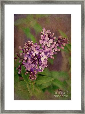 Lilacs Framed Print by Krista-