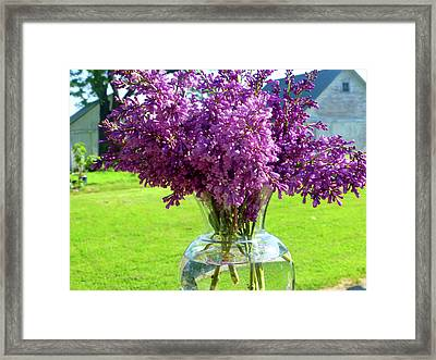 Lilacs On Clear Base Framed Print by Tina M Wenger