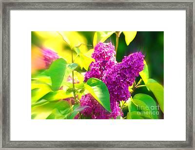 Lilacs Framed Print by Susanne Van Hulst