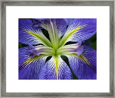 Lilied Framed Print by Vari Buendia
