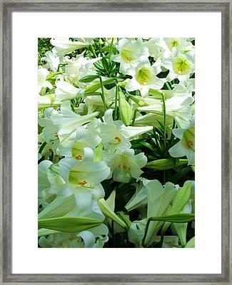 Lilies 11 Framed Print