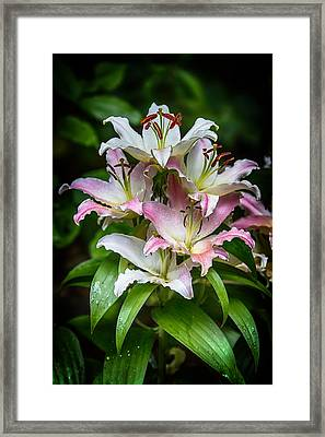 Lilies After The Rain Framed Print
